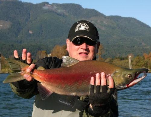 Losos nerka anglicky sockeye salmon místy nazývaný také red